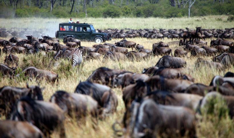 wildebeest-migration-adventure east africa