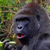 4-days-uganda