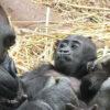 4-days-uganda-3