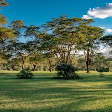 Kenya, Tanzania and Rwanda
