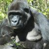 3-Days-Rwanda
