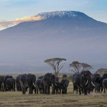 Kenya, Tanzania and Uganda