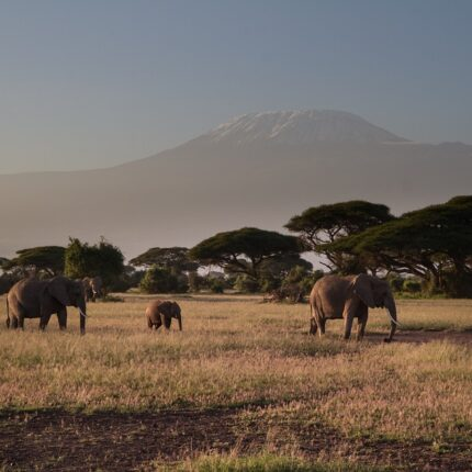 mount kilimanjaro from Amboseli National park