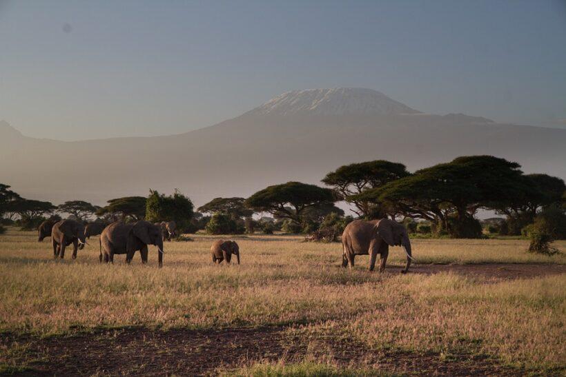 mount kilimanjaro from Amboseli National park