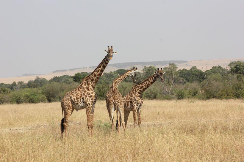 safari-2833281_1920