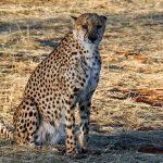 12-Day-Kenya-150×150