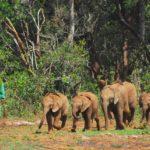 baby-elephants-4748163_1280-150×150