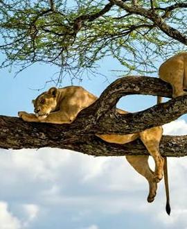 ngorongoro-safari-tanzania