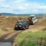 safari-1845202_1280-150×150
