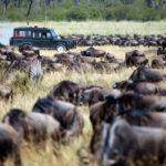 wildebeest-migration-adventure-east-africa-150×150